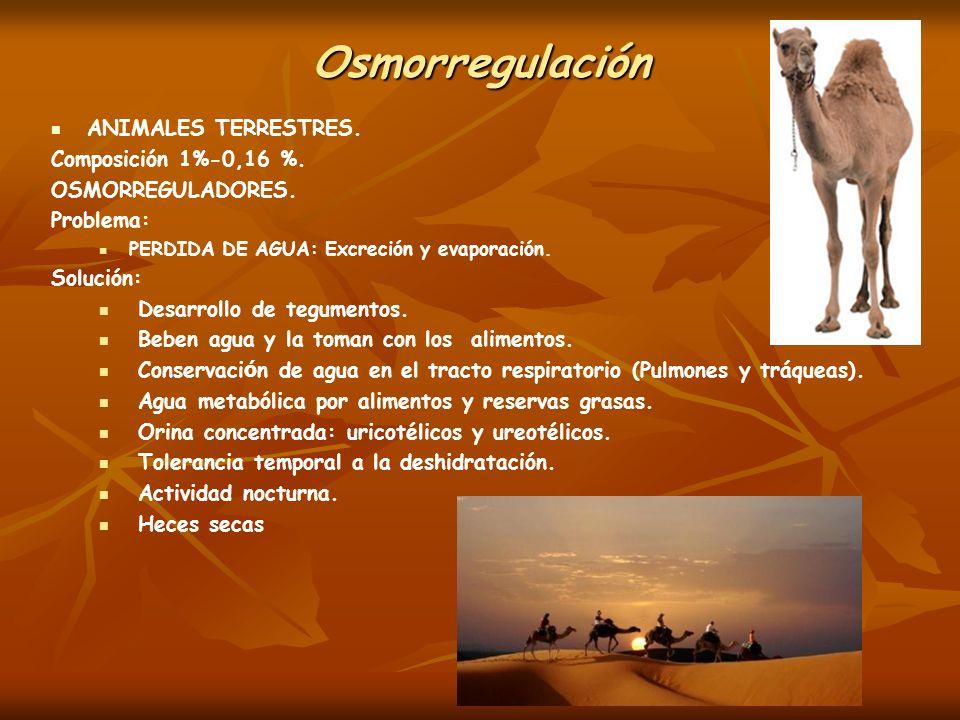 Osmorregulación ANIMALES TERRESTRES. Composición 1%-0,16 %.