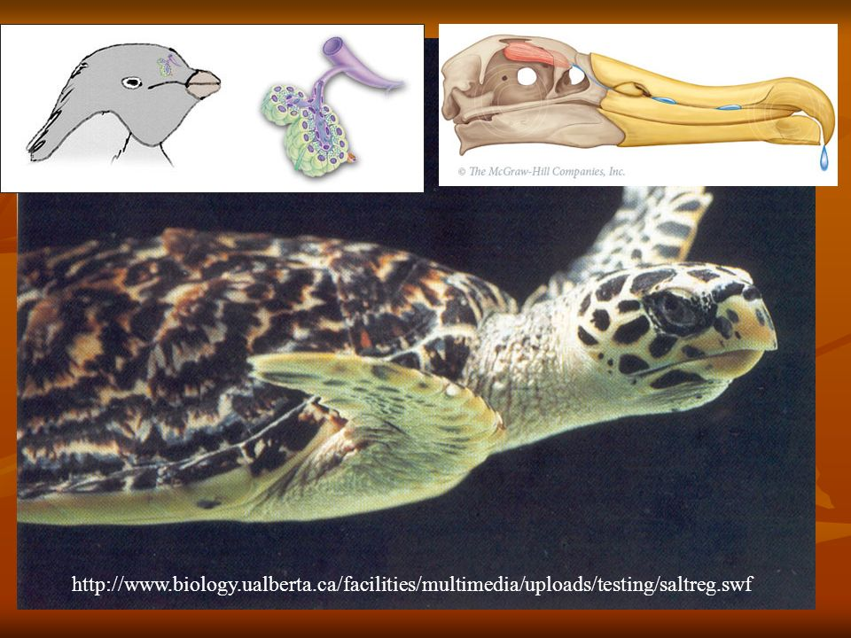http://www. biology. ualberta