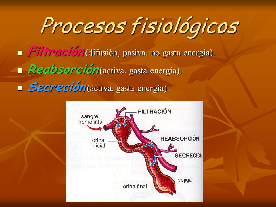 Procesos fisiológicos