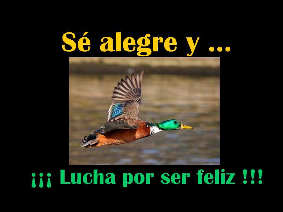 Sé alegre y … ¡¡¡ Lucha por ser feliz !!!