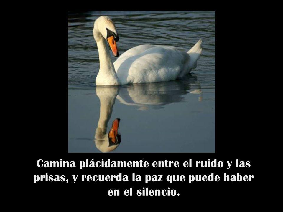 Camina plácidamente entre el ruido y las prisas, y recuerda la paz que puede haber en el silencio.