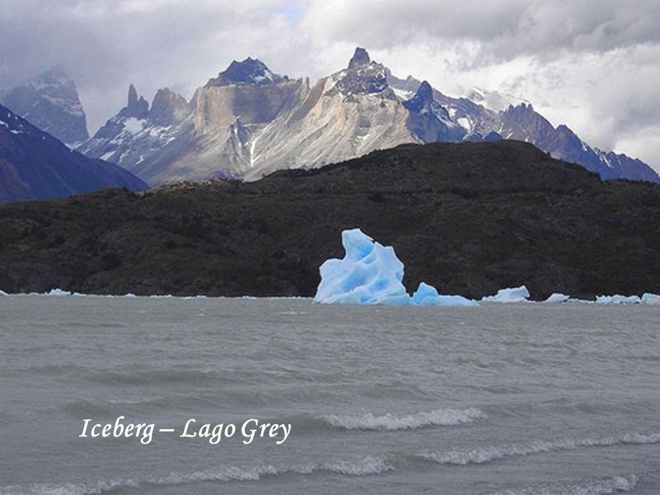 Iceberg – Lago Grey