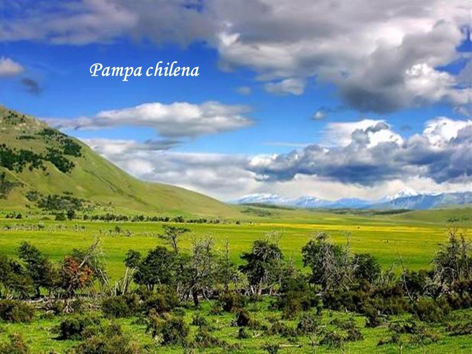 Pampa chilena