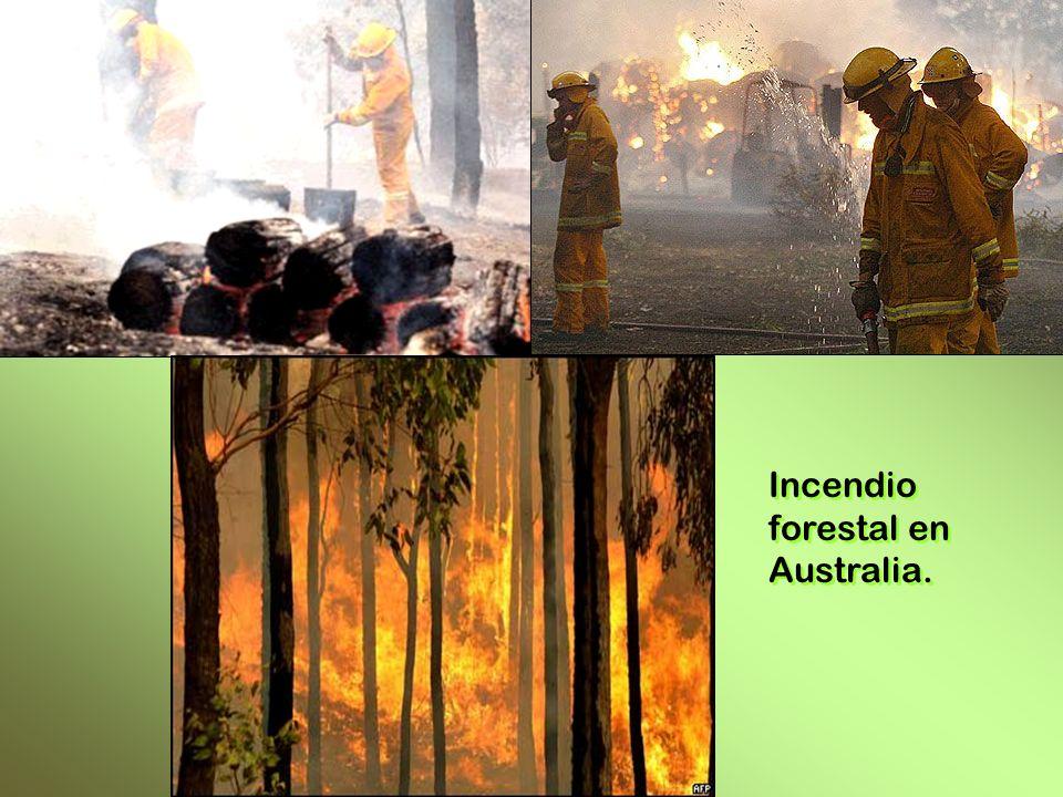 Incendio forestal en Australia.