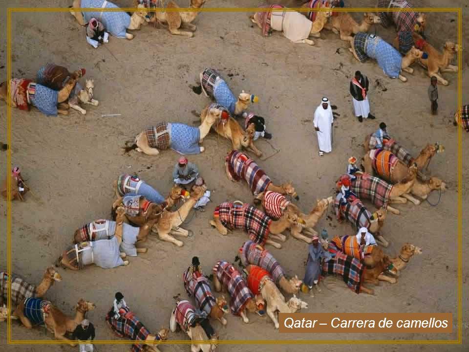 Qatar – Carrera de camellos