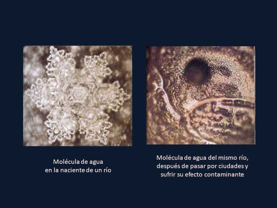 Molécula de agua del mismo río, después de pasar por ciudades y sufrir su efecto contaminante