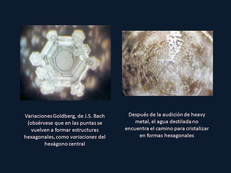 Después de la audición de heavy metal, el agua destilada no encuentra el camino para cristalizar en formas hexagonales