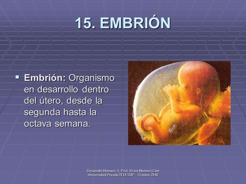 15. EMBRIÓN Embrión: Organismo en desarrollo dentro del útero, desde la segunda hasta la octava semana.