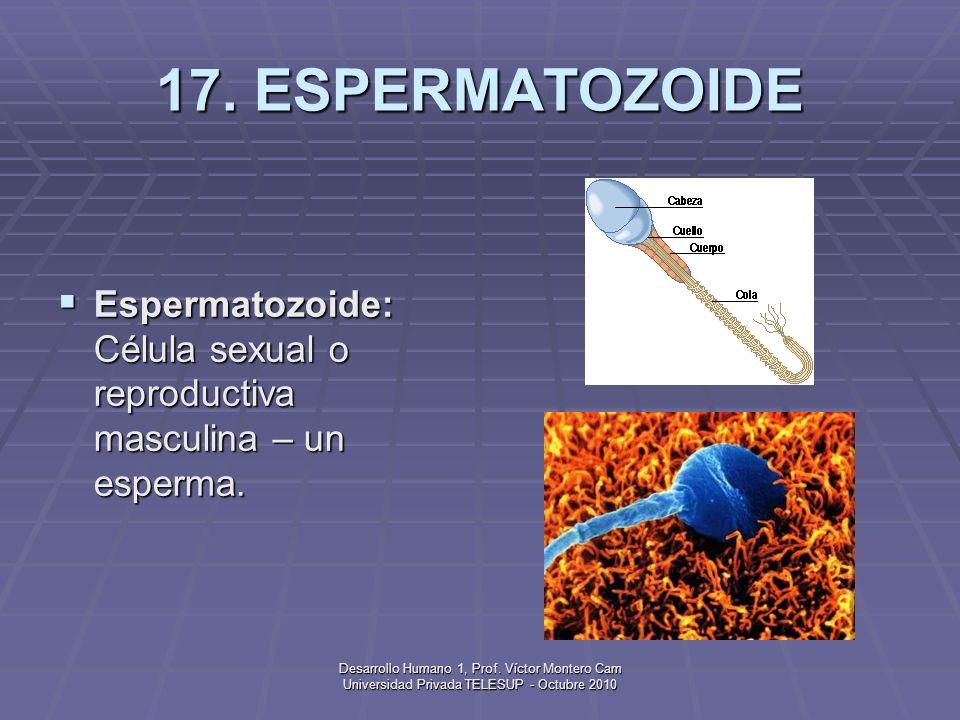 17. ESPERMATOZOIDE Espermatozoide: Célula sexual o reproductiva masculina – un esperma.