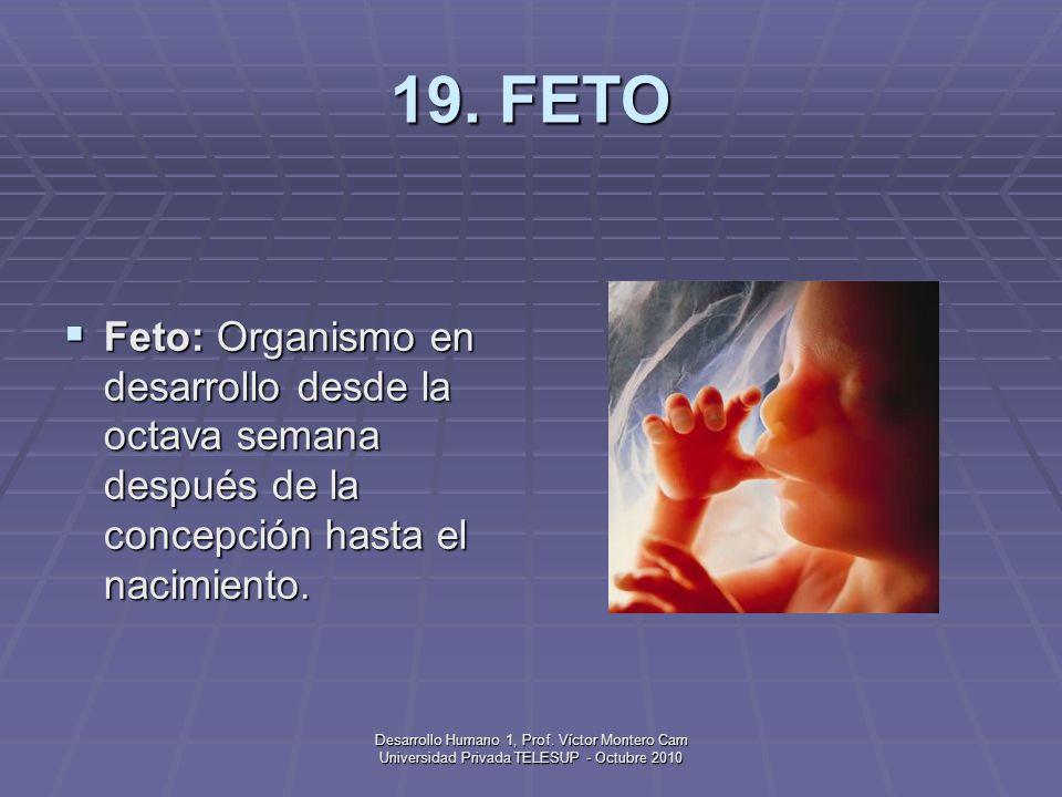 19. FETO Feto: Organismo en desarrollo desde la octava semana después de la concepción hasta el nacimiento.