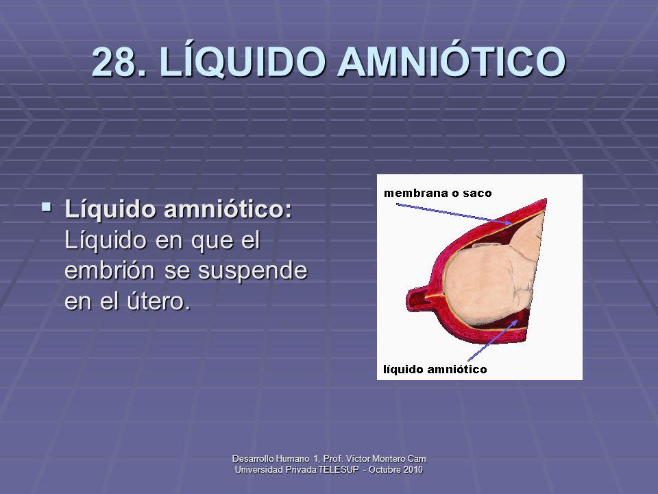 28. LÍQUIDO AMNIÓTICO Líquido amniótico: Líquido en que el embrión se suspende en el útero.