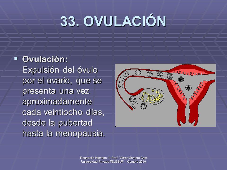 33. OVULACIÓN