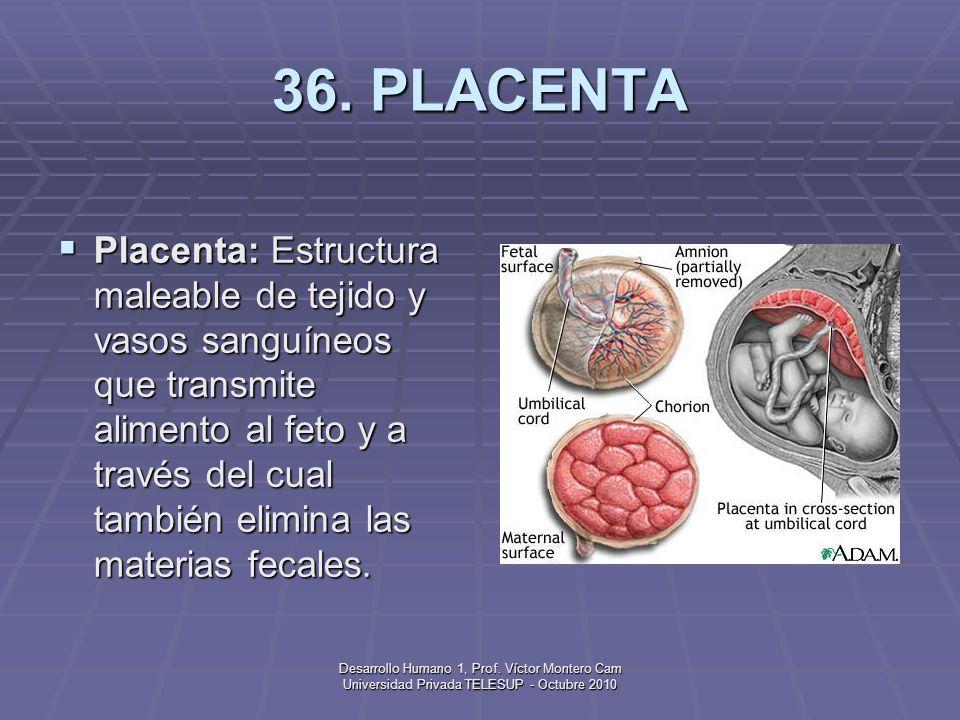 36. PLACENTA
