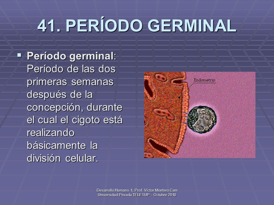41. PERÍODO GERMINAL