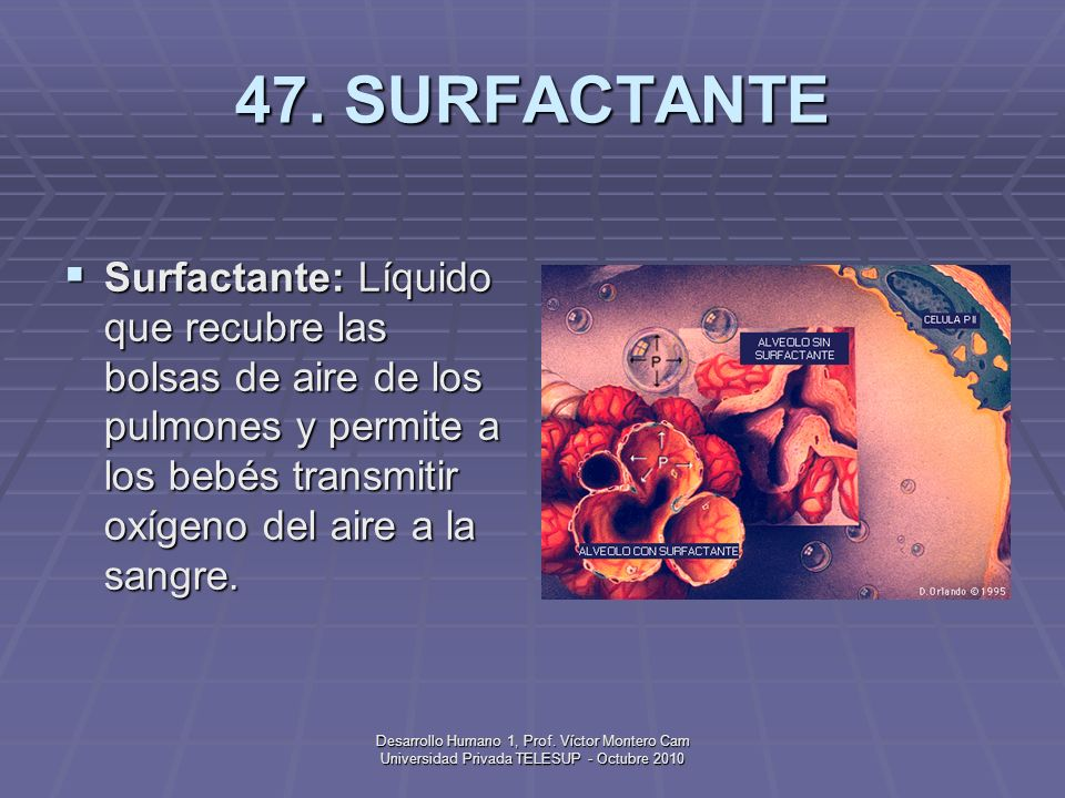 47. SURFACTANTESurfactante: Líquido que recubre las bolsas de aire de los pulmones y permite a los bebés transmitir oxígeno del aire a la sangre.