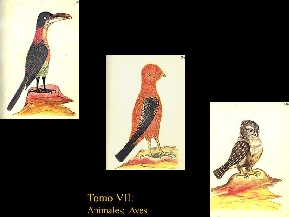 Tomo VII: Animales: Aves