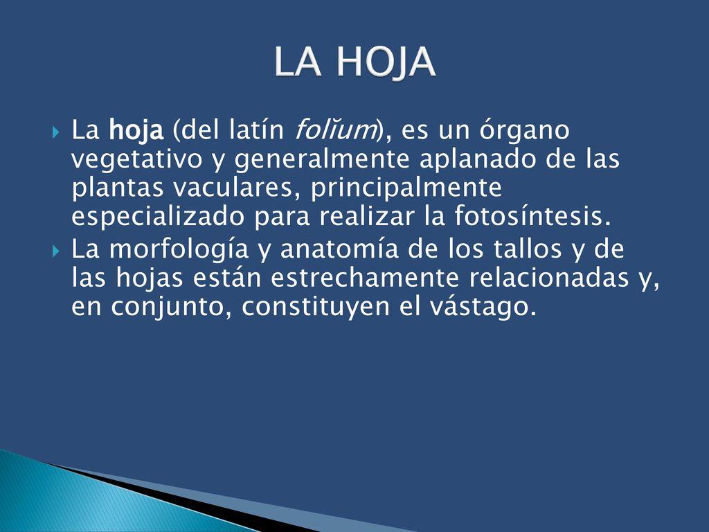 Lujo Ppt Planta De La Anatomía Cresta - Anatomía de Las Imágenesdel ...