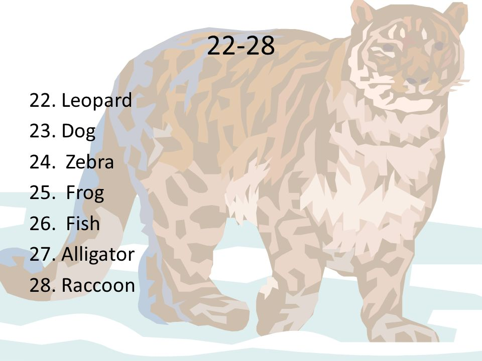 22-28 22. Leopard Dog Zebra Frog Fish Alligator Raccoon