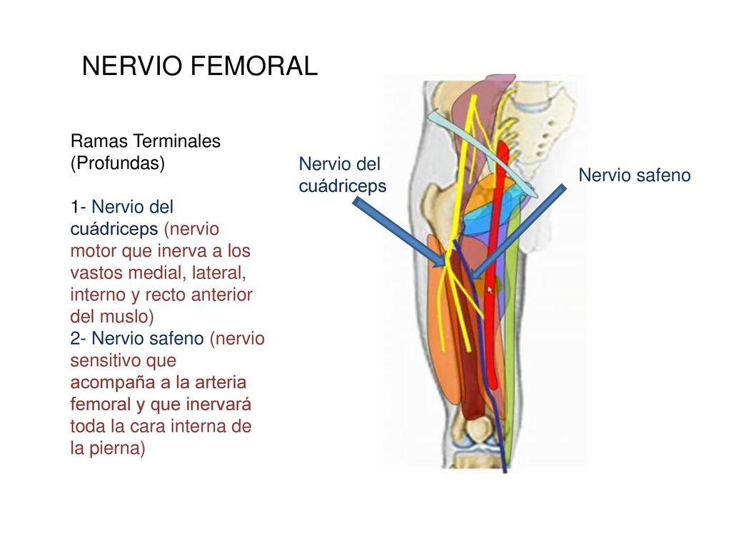 Único Diagrama De Una Pierna Regalo - Anatomía de Las Imágenesdel ...