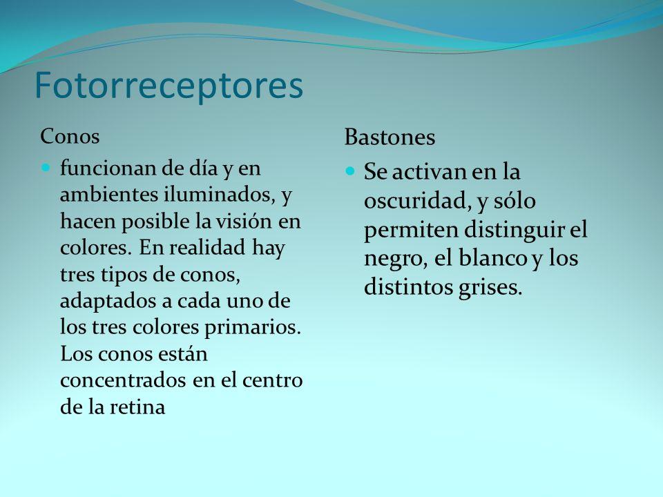 Fotorreceptores Bastones