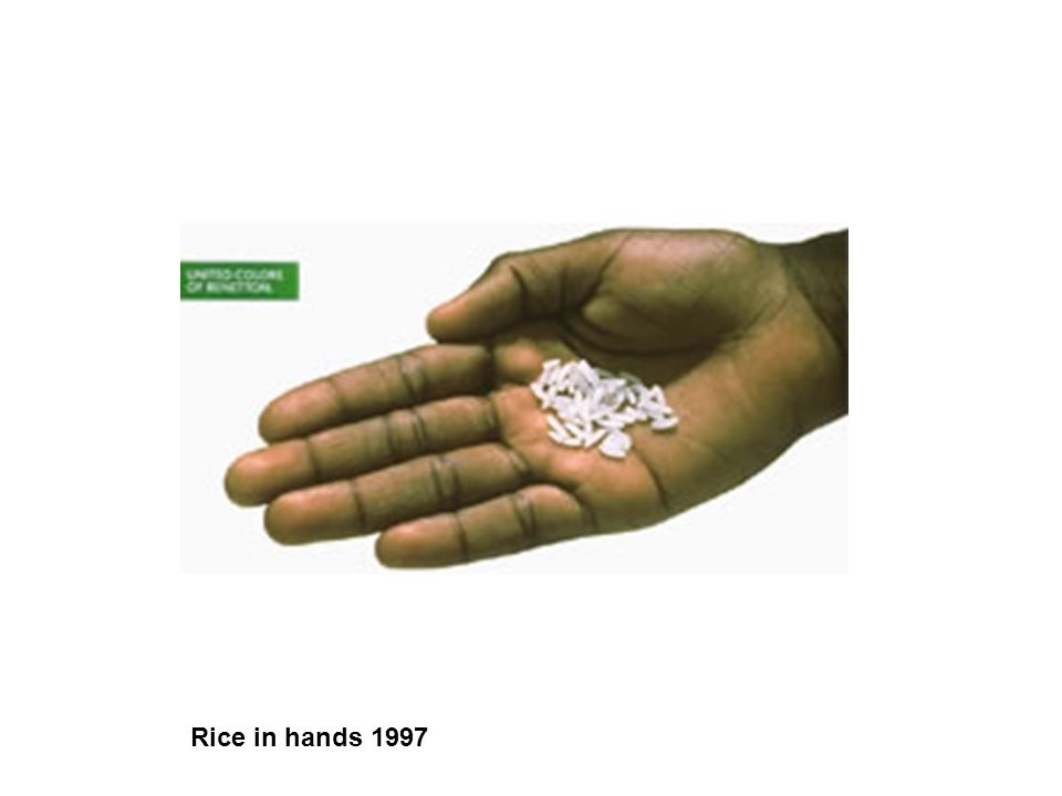 Rice in hands 1997