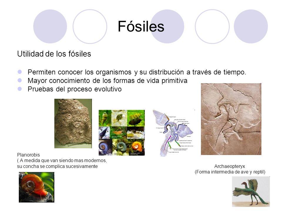 Fósiles Utilidad de los fósiles