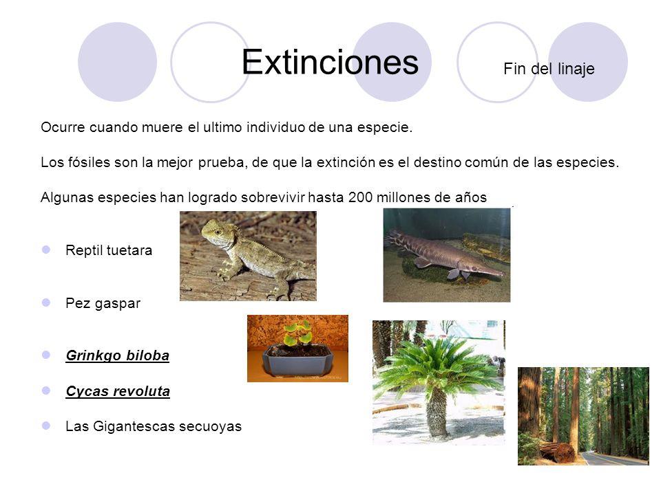 Extinciones Fin del linaje