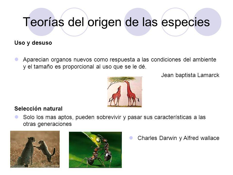 Teorías del origen de las especies