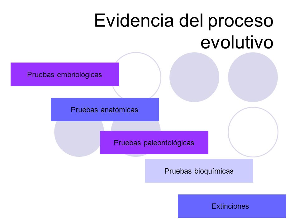 Evidencia del proceso evolutivo