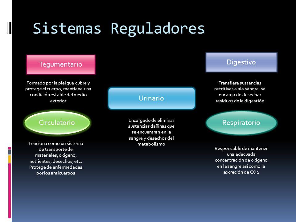 Sistemas Reguladores Digestivo Tegumentario Urinario Circulatorio