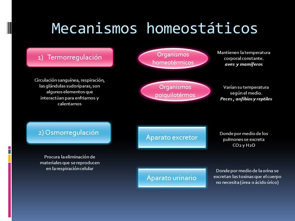 Mecanismos homeostáticos