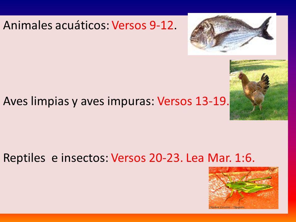 Animales acuáticos: Versos 9-12.
