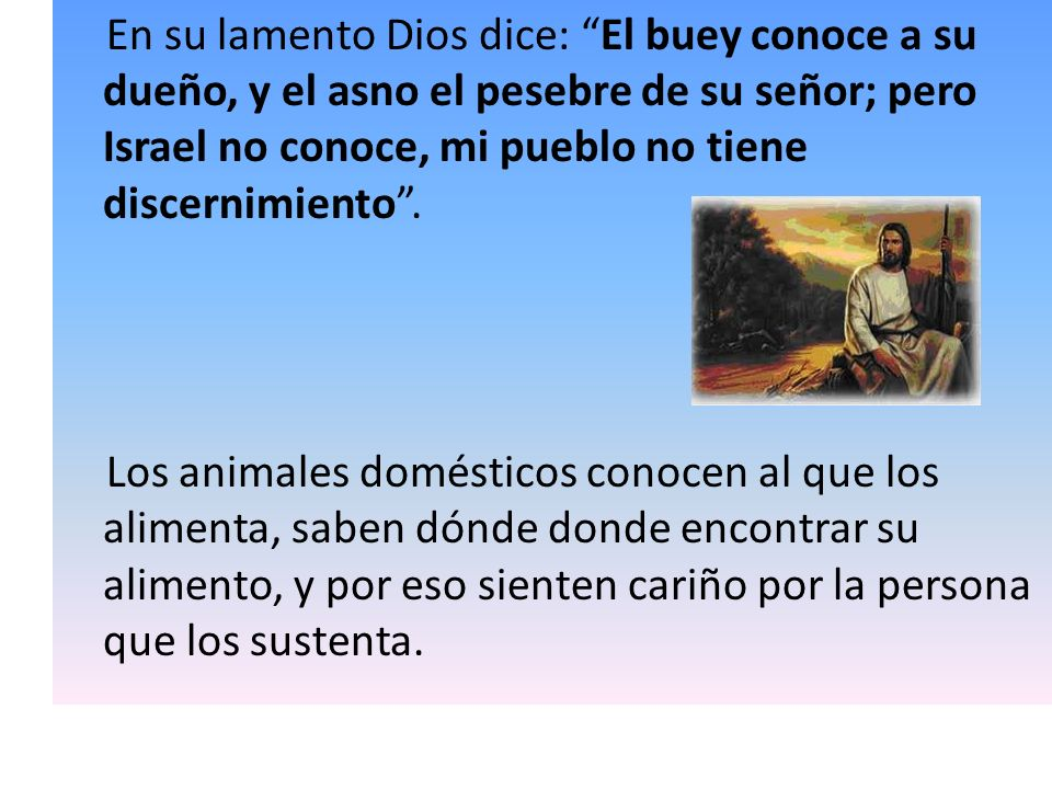 En su lamento Dios dice: El buey conoce a su dueño, y el asno el pesebre de su señor; pero Israel no conoce, mi pueblo no tiene discernimiento .