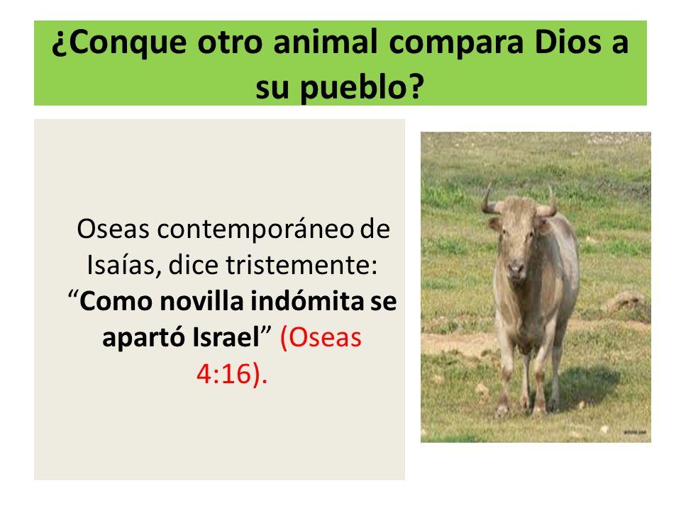 ¿Conque otro animal compara Dios a su pueblo