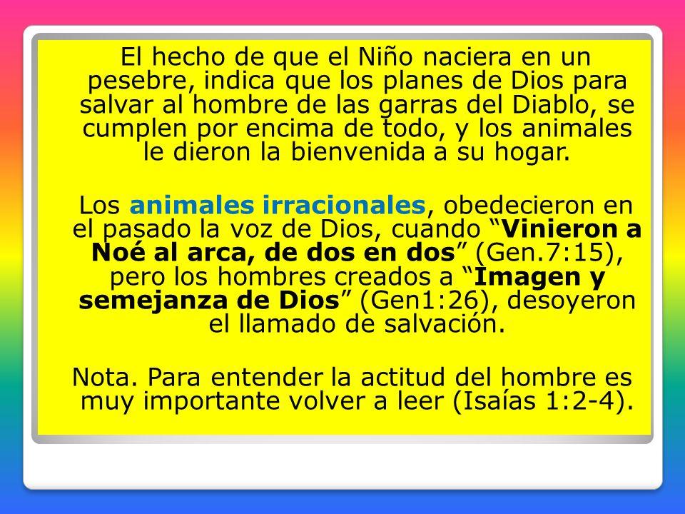 El hecho de que el Niño naciera en un pesebre, indica que los planes de Dios para salvar al hombre de las garras del Diablo, se cumplen por encima de todo, y los animales le dieron la bienvenida a su hogar.