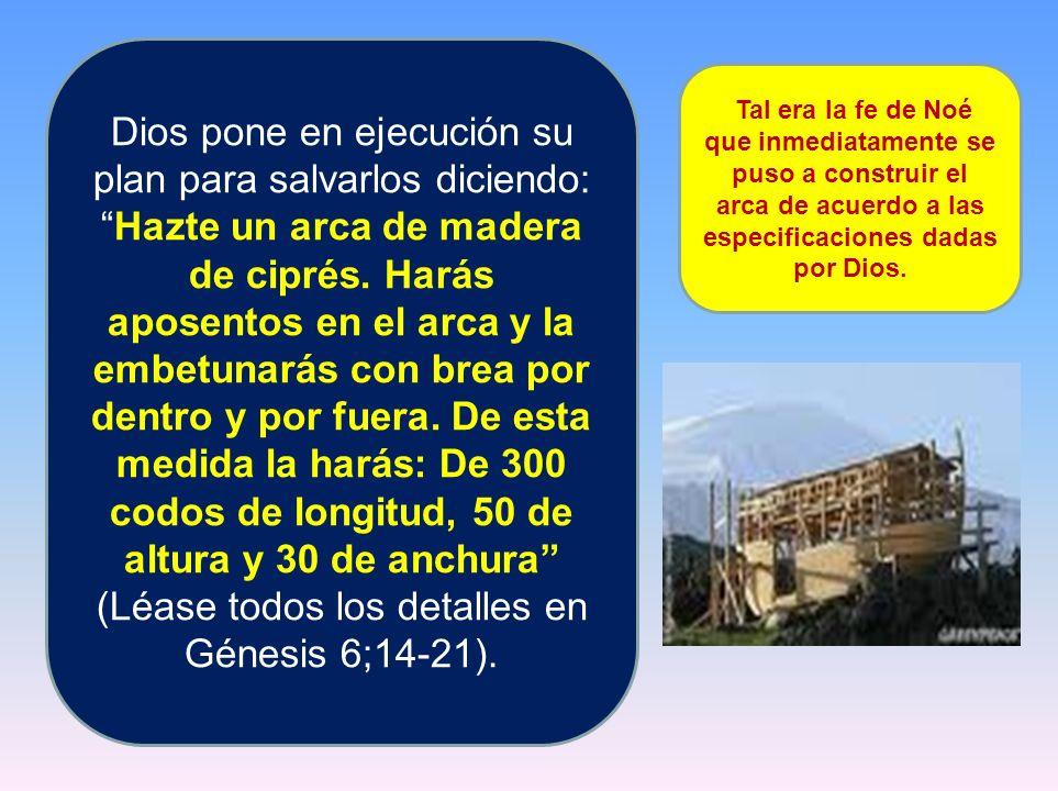 Dios pone en ejecución su plan para salvarlos diciendo: Hazte un arca de madera de ciprés. Harás aposentos en el arca y la embetunarás con brea por dentro y por fuera. De esta medida la harás: De 300 codos de longitud, 50 de altura y 30 de anchura (Léase todos los detalles en Génesis 6;14-21).