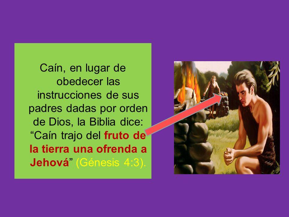 Caín, en lugar de obedecer las instrucciones de sus padres dadas por orden de Dios, la Biblia dice: Caín trajo del fruto de la tierra una ofrenda a Jehová (Génesis 4:3).