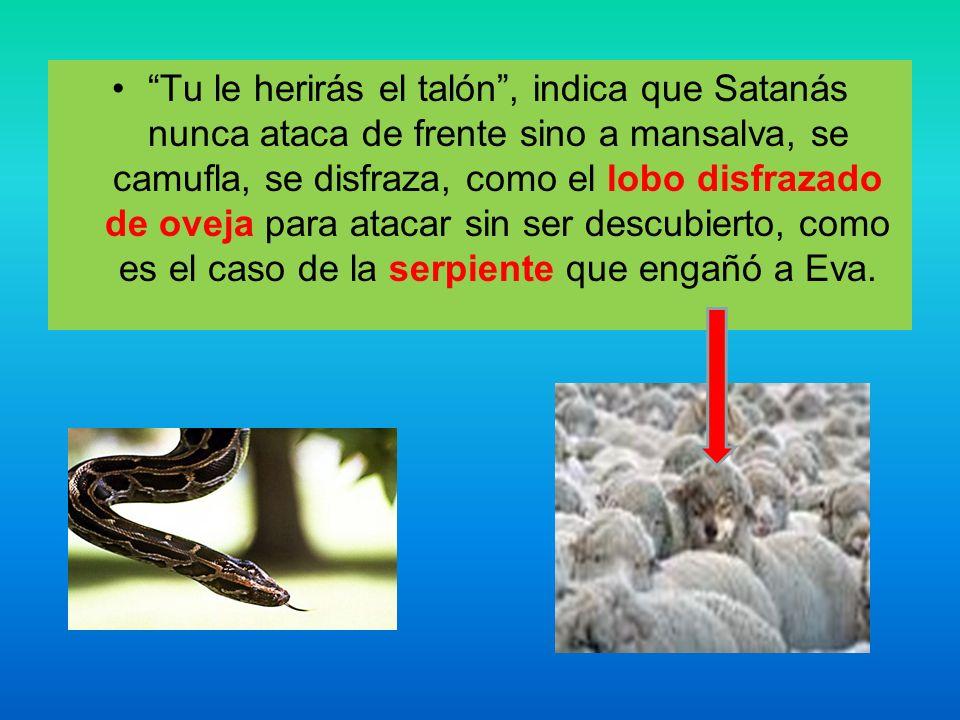 Tu le herirás el talón , indica que Satanás nunca ataca de frente sino a mansalva, se camufla, se disfraza, como el lobo disfrazado de oveja para atacar sin ser descubierto, como es el caso de la serpiente que engañó a Eva.