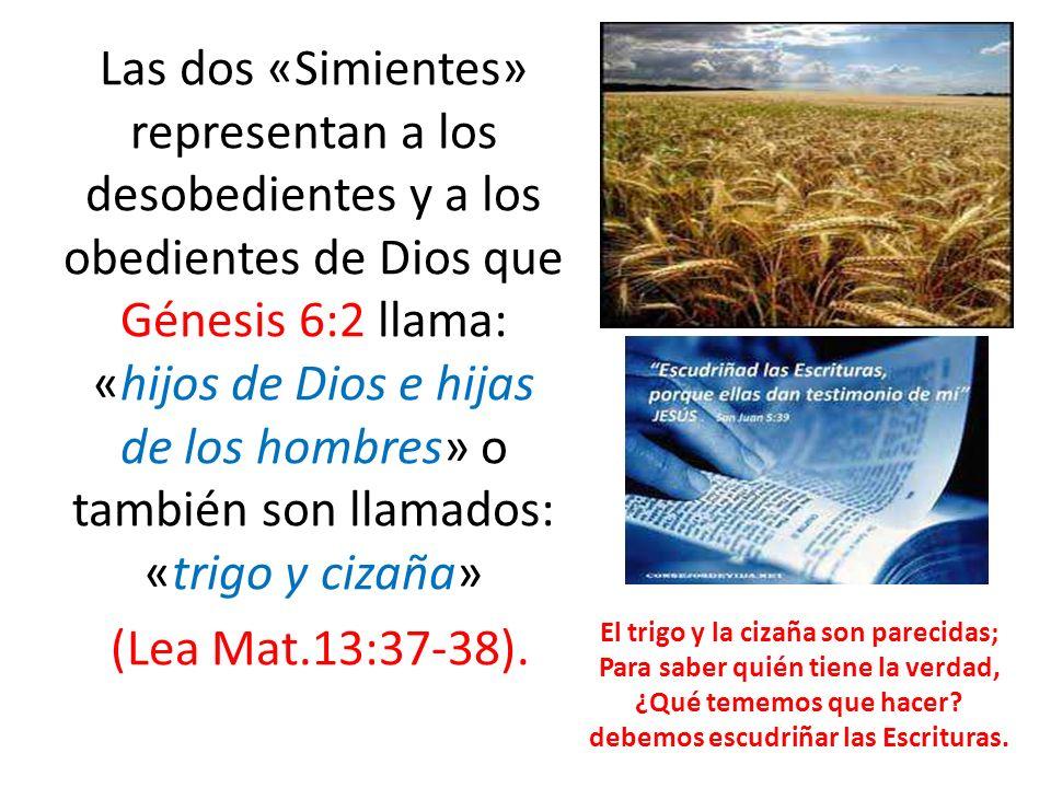 Las dos «Simientes» representan a los desobedientes y a los obedientes de Dios que Génesis 6:2 llama: «hijos de Dios e hijas de los hombres» o también son llamados: «trigo y cizaña» (Lea Mat.13:37-38).
