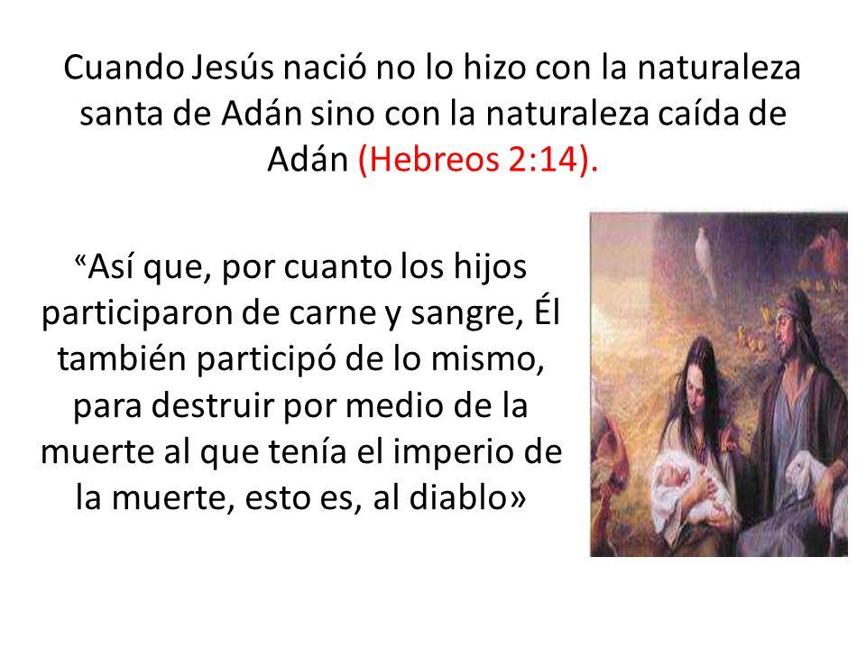 Cuando Jesús nació no lo hizo con la naturaleza santa de Adán sino con la naturaleza caída de Adán (Hebreos 2:14).