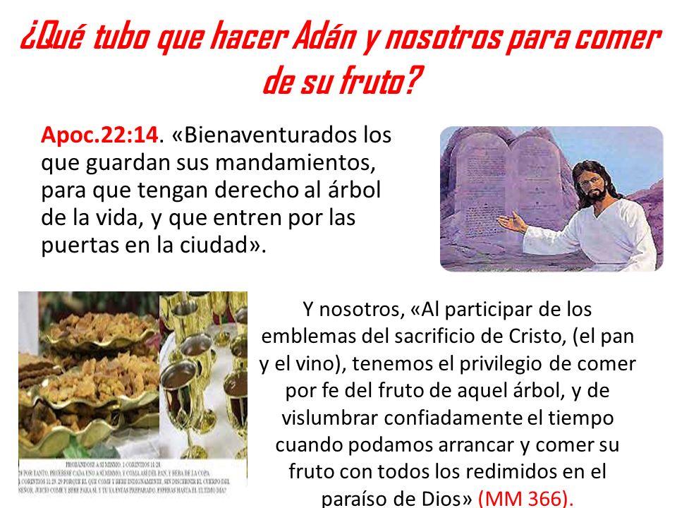 ¿Qué tubo que hacer Adán y nosotros para comer de su fruto