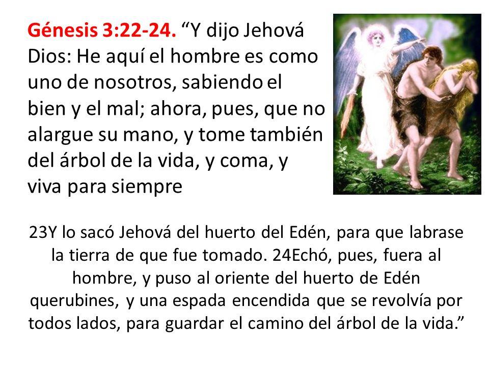 Génesis 3:22-24. Y dijo Jehová Dios: He aquí el hombre es como uno de nosotros, sabiendo el bien y el mal; ahora, pues, que no alargue su mano, y tome también del árbol de la vida, y coma, y viva para siempre