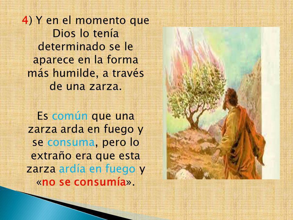 4) Y en el momento que Dios lo tenía determinado se le aparece en la forma más humilde, a través de una zarza.