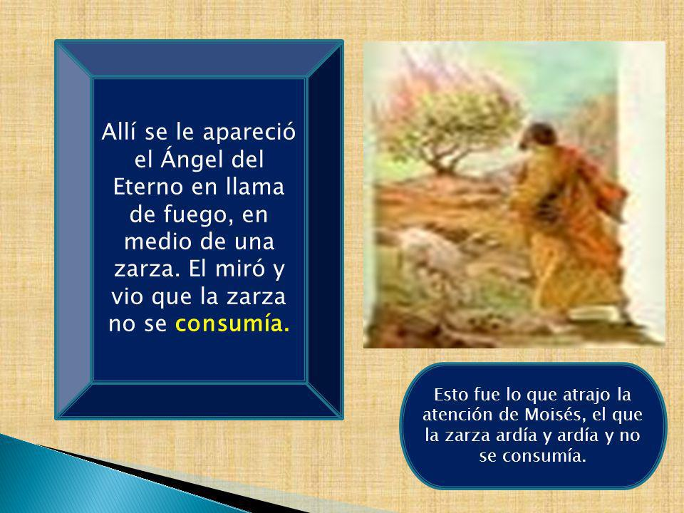 Allí se le apareció el Ángel del Eterno en llama de fuego, en medio de una zarza. El miró y vio que la zarza no se consumía.