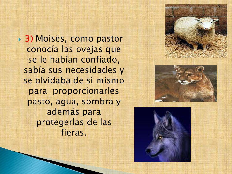 3) Moisés, como pastor conocía las ovejas que se le habían confiado, sabía sus necesidades y se olvidaba de si mismo para proporcionarles pasto, agua, sombra y además para protegerlas de las fieras.