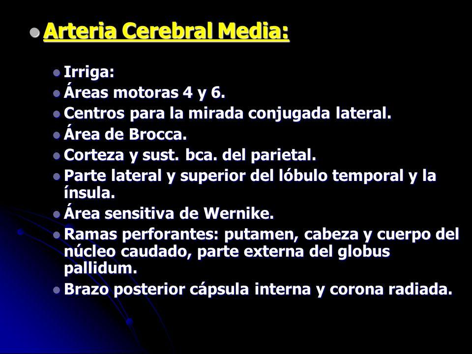 Arteria Cerebral Media: