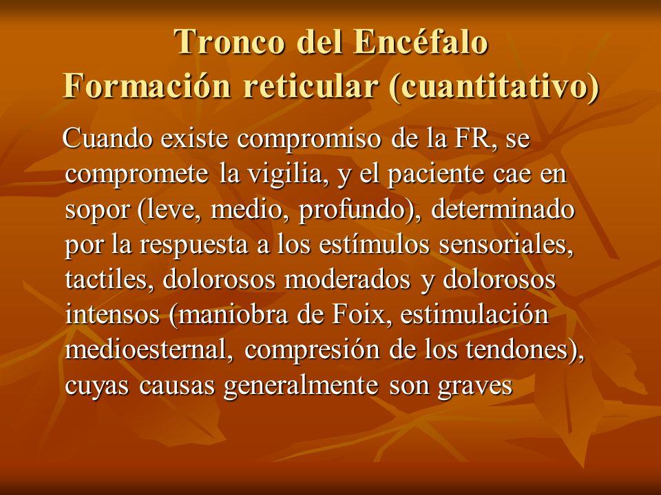 Tronco del Encéfalo Formación reticular (cuantitativo)