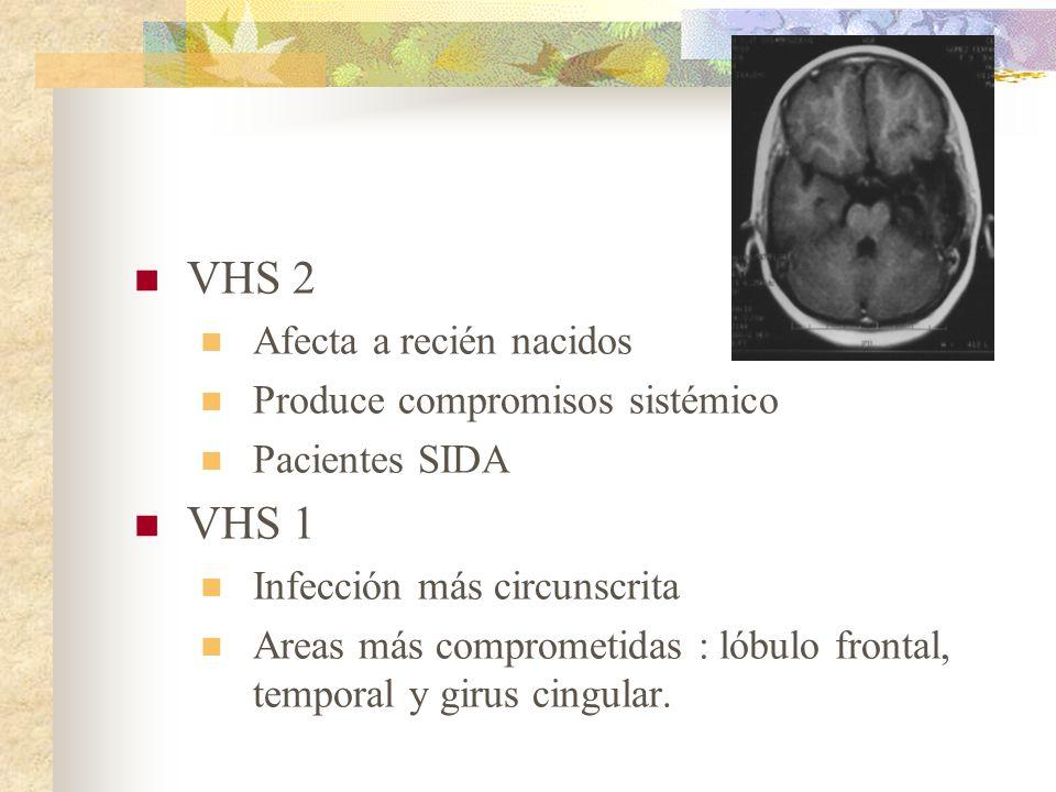 VHS 2 VHS 1 Afecta a recién nacidos Produce compromisos sistémico