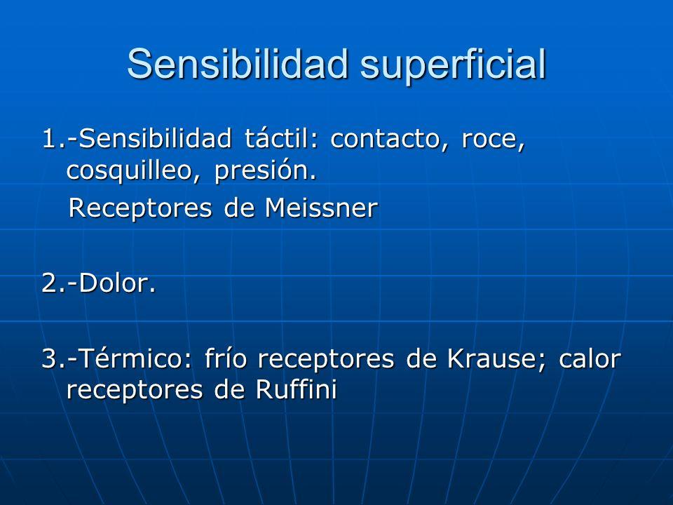 Sensibilidad superficial