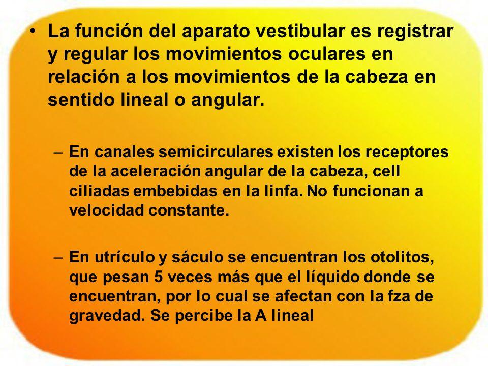 La función del aparato vestibular es registrar y regular los movimientos oculares en relación a los movimientos de la cabeza en sentido lineal o angular.